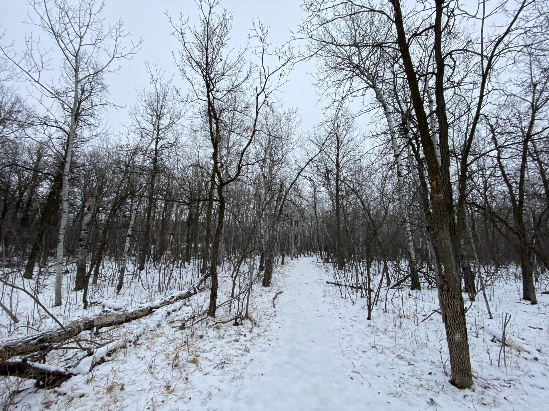 A hike through a nearby forest in winter