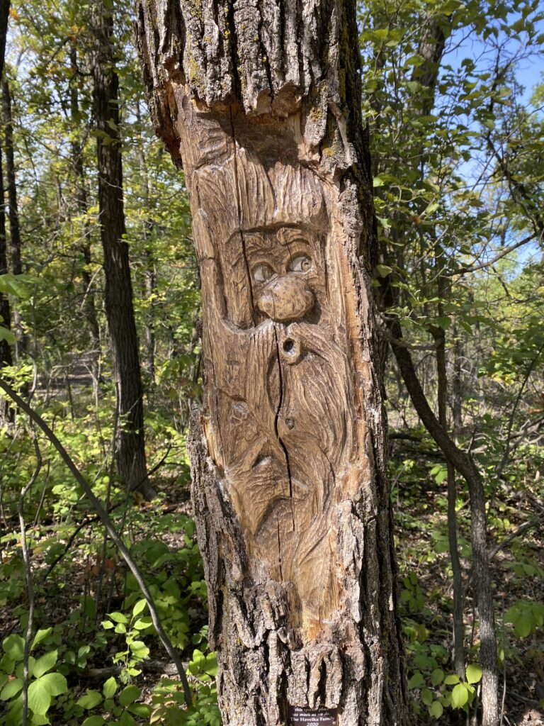 Wood carving of a face on a tree
