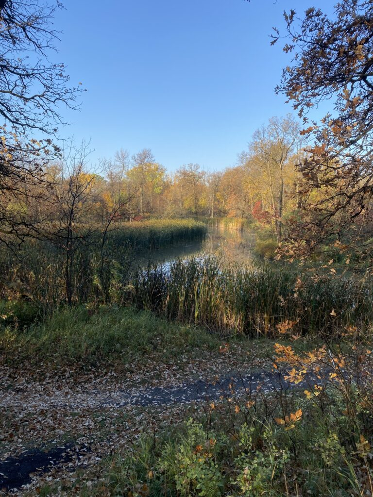 The Seine river winds it's way in the middle of the forest on a cool autumn morning.